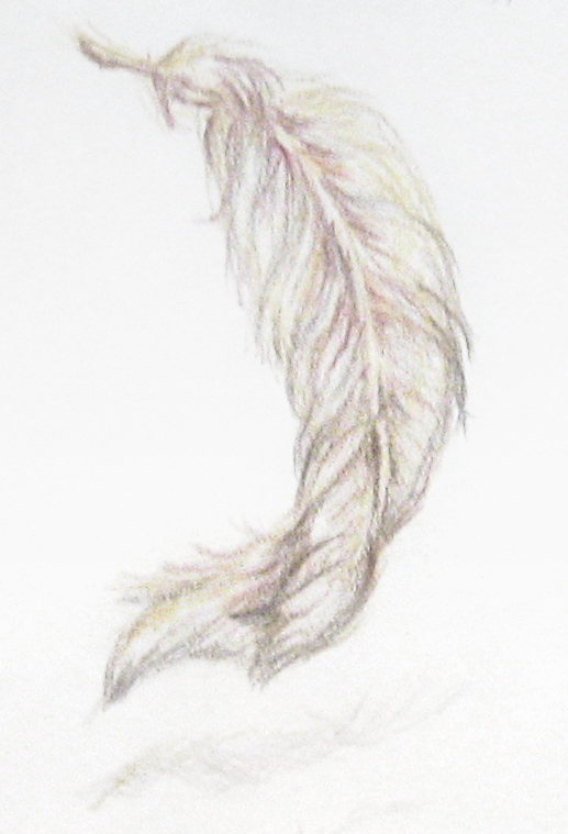 feather_sketch_2010_001.jpg
